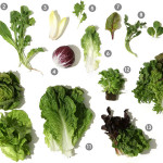 Spices, Herbs, and Food Pairings for Salad Greens